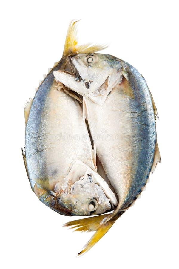 Ψάρια σκουμπριών στον ατμό, ψάρια σκουμπριών που βράζουν στον ατμό στο άσπρο υπόβαθρο στοκ φωτογραφίες