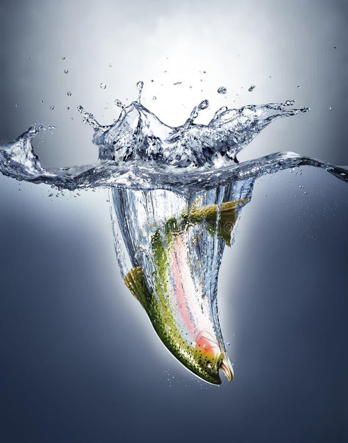 Ψάρια σολομών που καταβρέχουν στο νερό που διαμορφώνει έναν παφλασμό κορωνών. απεικόνιση αποθεμάτων