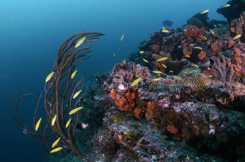 Ψάρια σταθμών καθαρισμού στοκ εικόνες
