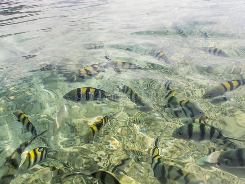 Ψάρια στην επιφάνεια νερού στοκ εικόνες