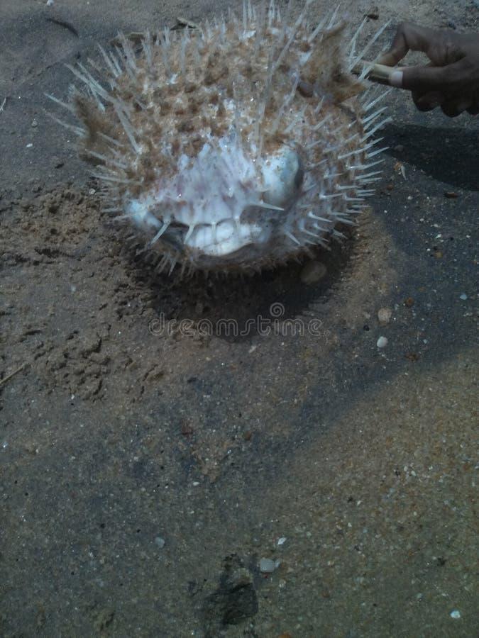 Ψάρια στην παραλία στοκ εικόνες