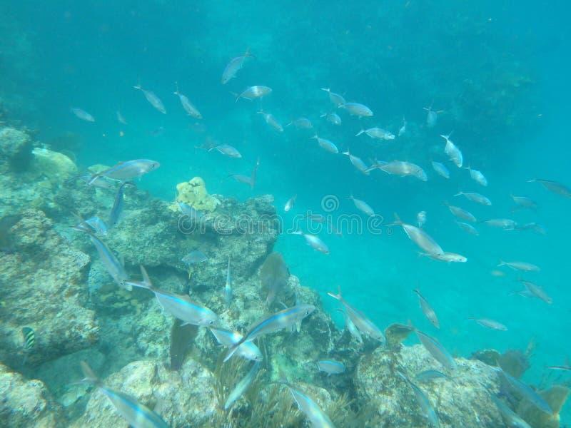 Ψάρια στη θάλασσα στοκ εικόνα