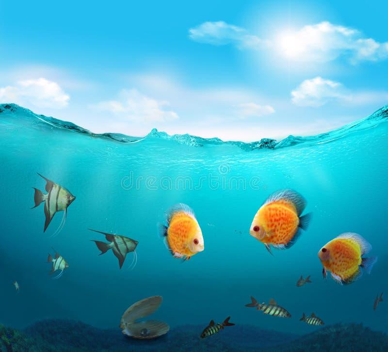 Ψάρια στη θάλασσα. απεικόνιση αποθεμάτων