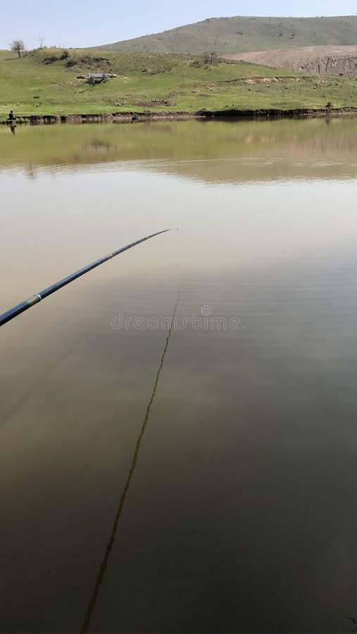Ψάρια στη λίμνη στοκ εικόνα