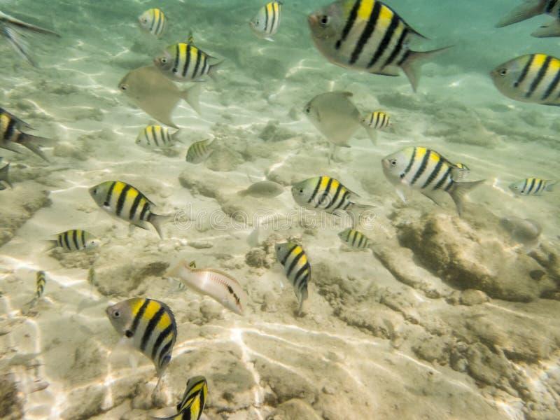 Ψάρια στον αμμώδη βυθό στοκ φωτογραφίες με δικαίωμα ελεύθερης χρήσης