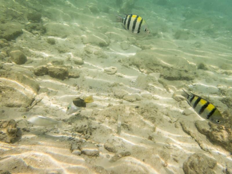 Ψάρια στον αμμώδη βυθό στοκ εικόνες