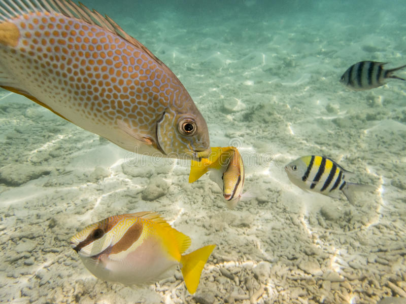Ψάρια στον αμμώδη βυθό στοκ εικόνα
