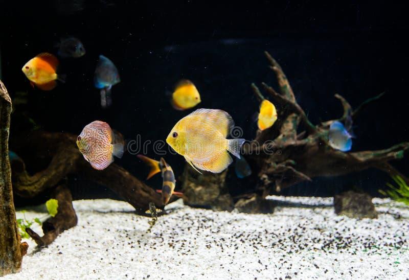 Ψάρια στο θαλάσσιο ενυδρείο στοκ εικόνες με δικαίωμα ελεύθερης χρήσης