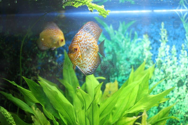 Ψάρια στο acquarium στοκ φωτογραφίες