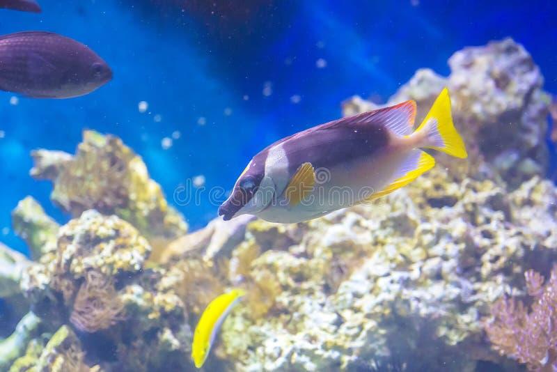 Ψάρια στο acquarium στοκ φωτογραφία