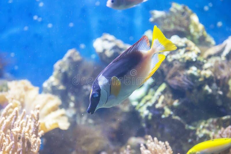 Ψάρια στο acquarium στοκ εικόνα με δικαίωμα ελεύθερης χρήσης