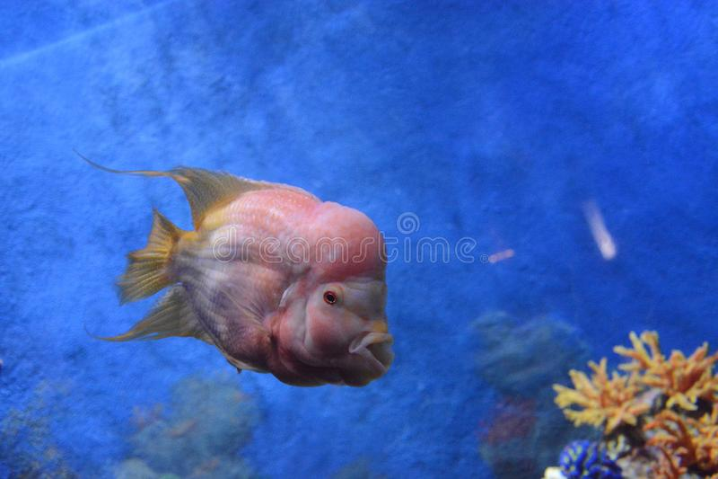 Ψάρια στο aguarium στοκ φωτογραφίες με δικαίωμα ελεύθερης χρήσης
