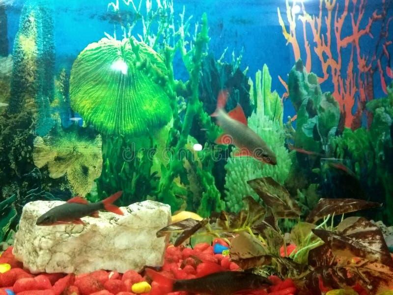 Ψάρια στο aqurim στοκ εικόνες