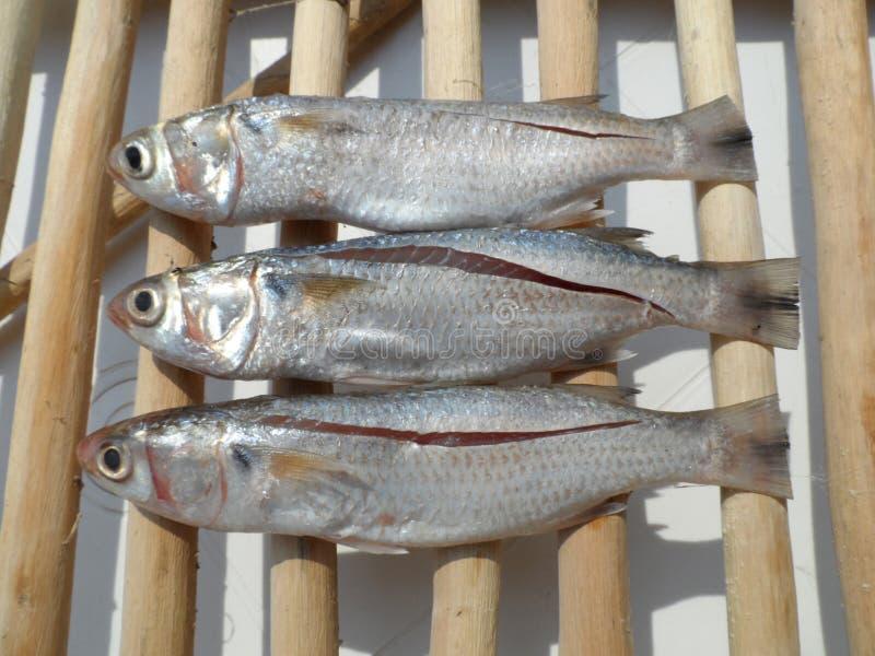 ψάρια τρία στοκ εικόνα με δικαίωμα ελεύθερης χρήσης