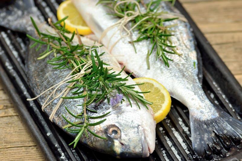 Ψάρια τσιπουρών στοκ φωτογραφίες