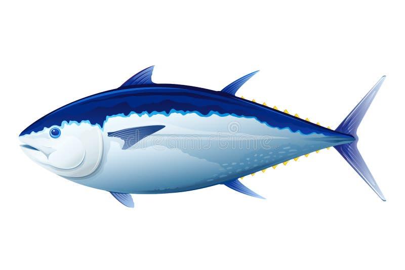 Ψάρια τόνου τόννων απεικόνιση αποθεμάτων