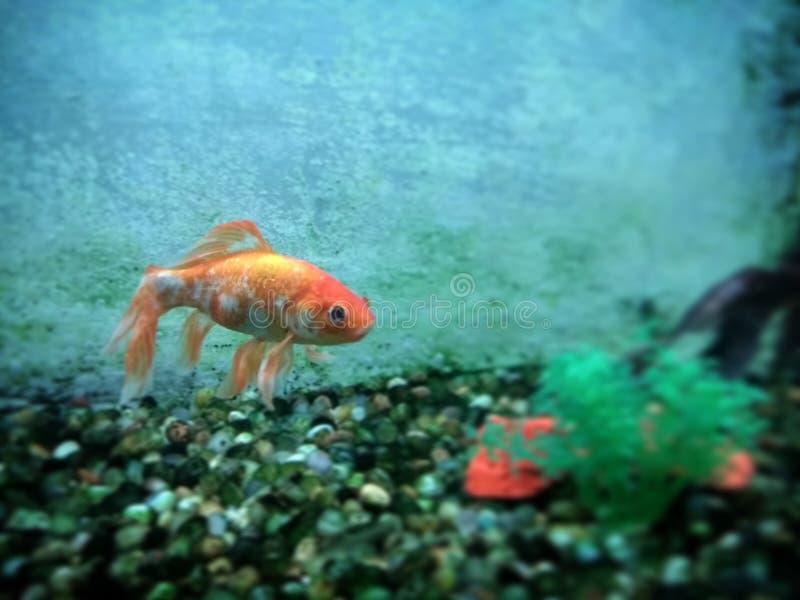 Ψάρια στοκ εικόνα με δικαίωμα ελεύθερης χρήσης
