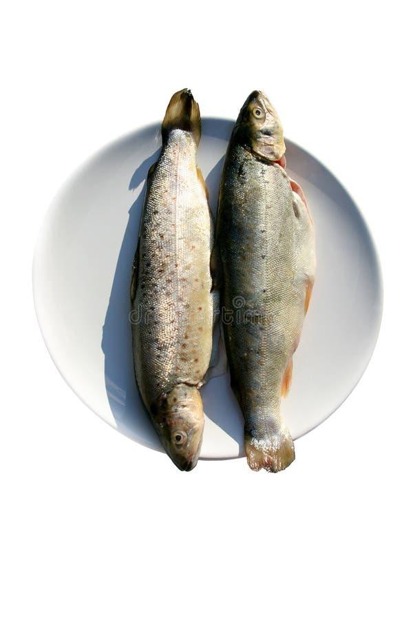 Download ψάρια στοκ εικόνα. εικόνα από θαλασσινά, ψάρια, τρόφιμα - 1525927