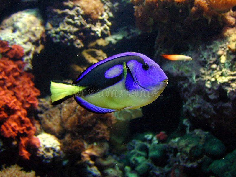 Download ψάρια στοκ εικόνα. εικόνα από wildlife, βακκινίων, ζωηρόχρωμος - 260747