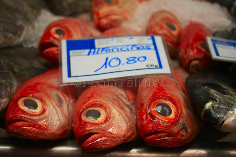 ψάρια alfoncino φρέσκα στοκ εικόνες