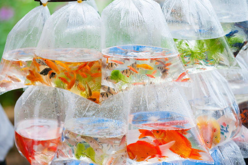 Ψάρια Aquarian στις πλαστικές τσάντες στοκ φωτογραφία