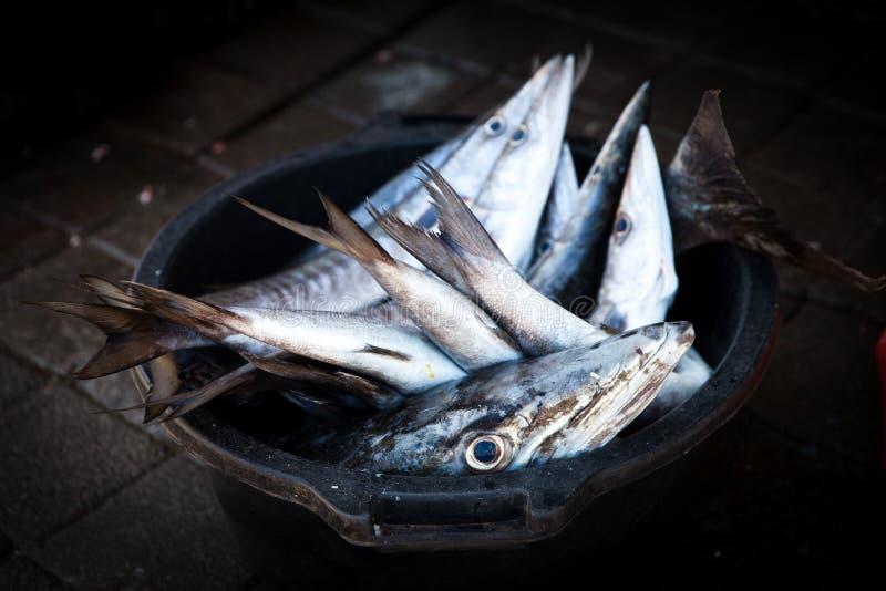 Ψάρια Barracuda Resh (Sphyraena barracuda) που πωλούν στην αγορά ψαριών στοκ φωτογραφίες με δικαίωμα ελεύθερης χρήσης