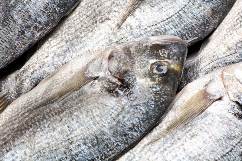 ψάρια dorada στοκ φωτογραφία