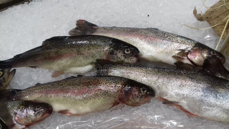 Ψάρια fishmonger στοκ εικόνα