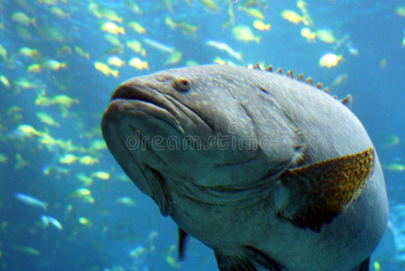 ψάρια fishy εδώ στοκ εικόνες