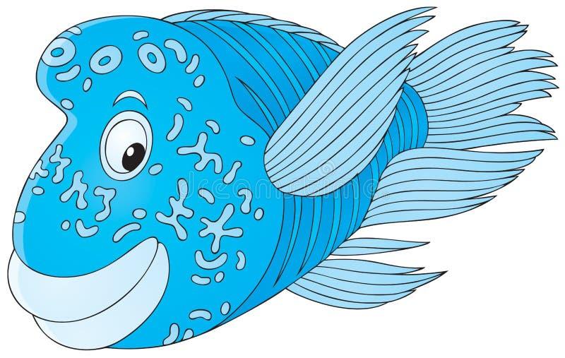 ψάρια napoleon ελεύθερη απεικόνιση δικαιώματος