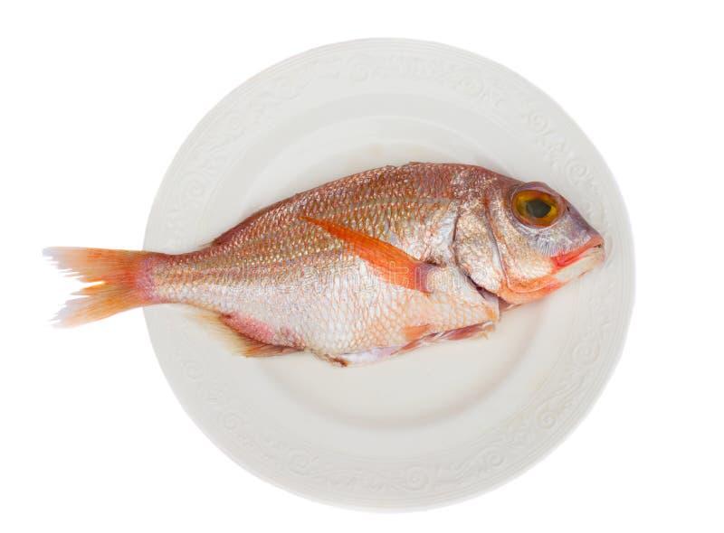 ψάρια Sama στοκ φωτογραφία