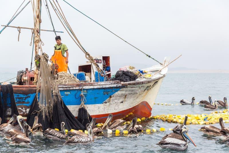 Ψαράς και πελεκάνοι στοκ φωτογραφία με δικαίωμα ελεύθερης χρήσης