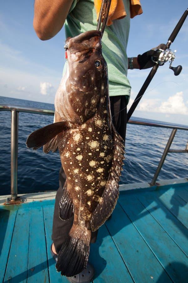 Ψαράς που κρατά μεγάλο grouper στο αλιευτικό σκάφος σε Andaman, ταϊλανδικά στοκ εικόνες