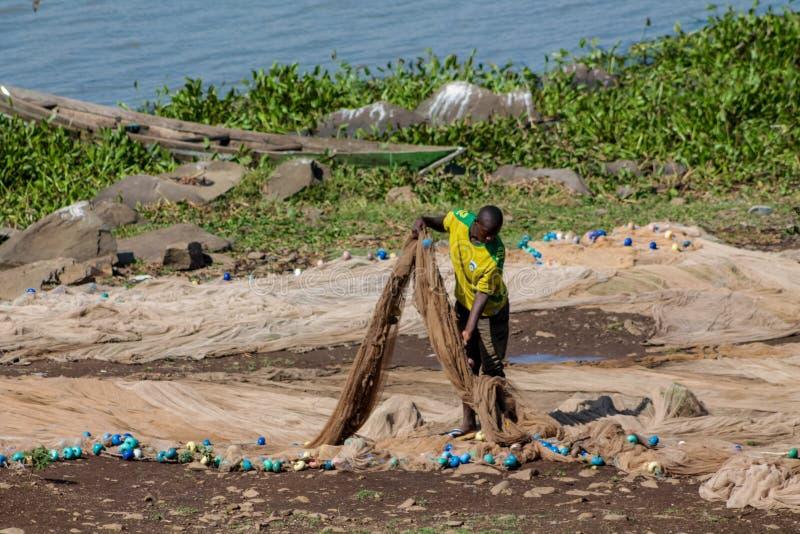 Ψαράς στη σκληρή εργασία ακτών Βικτώριας λιμνών με καθαρό, Αφρική στοκ φωτογραφίες με δικαίωμα ελεύθερης χρήσης