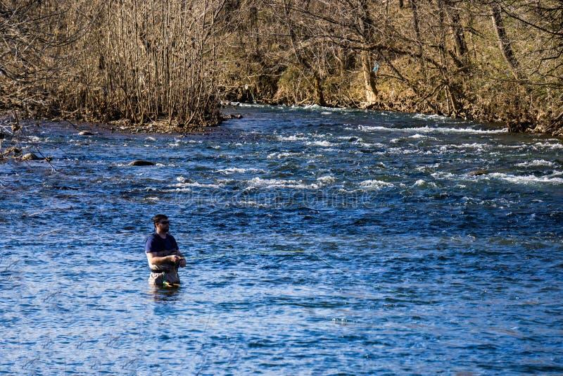 Ψαράς Tring μυγών για να πιάσει έναν ποταμό πεστροφών ο Roanoke, Βιρτζίνια, ΗΠΑ στοκ εικόνα