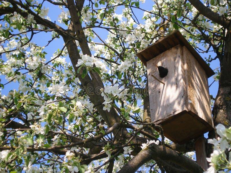 Ψαρόνι στο birdhouse σε ένα δέντρο στοκ φωτογραφία με δικαίωμα ελεύθερης χρήσης