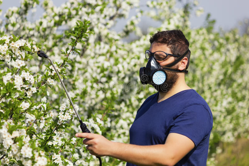 Ψεκάζοντας δέντρο κερασιών εργαζομένων στοκ εικόνες