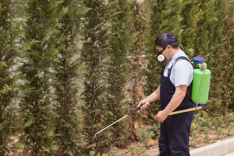 ψεκάζοντας δέντρα παρασίτων ελέγχου στοκ φωτογραφίες