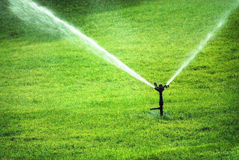 Ψεκάζοντας νερό ψεκαστήρων στην πολύβλαστη πράσινη χλόη στοκ εικόνες με δικαίωμα ελεύθερης χρήσης
