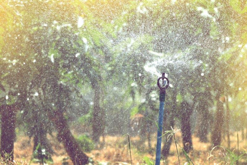 Ψεκάζοντας νερό ψεκαστήρων στον κήπο φρούτων στοκ φωτογραφία