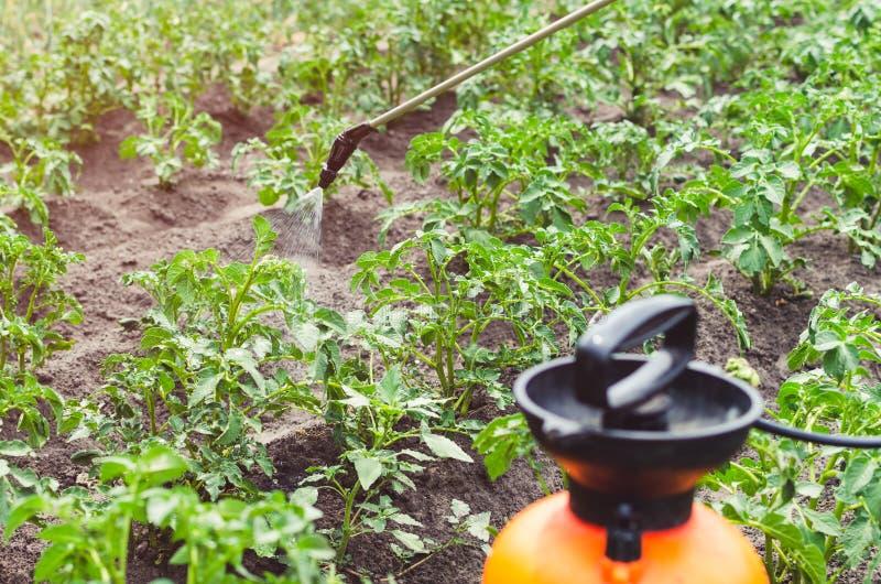 Ψεκάζοντας πατάτες με το δηλητήριο ενάντια στον κάνθαρο πατατών του Κολοράντο στοκ εικόνα