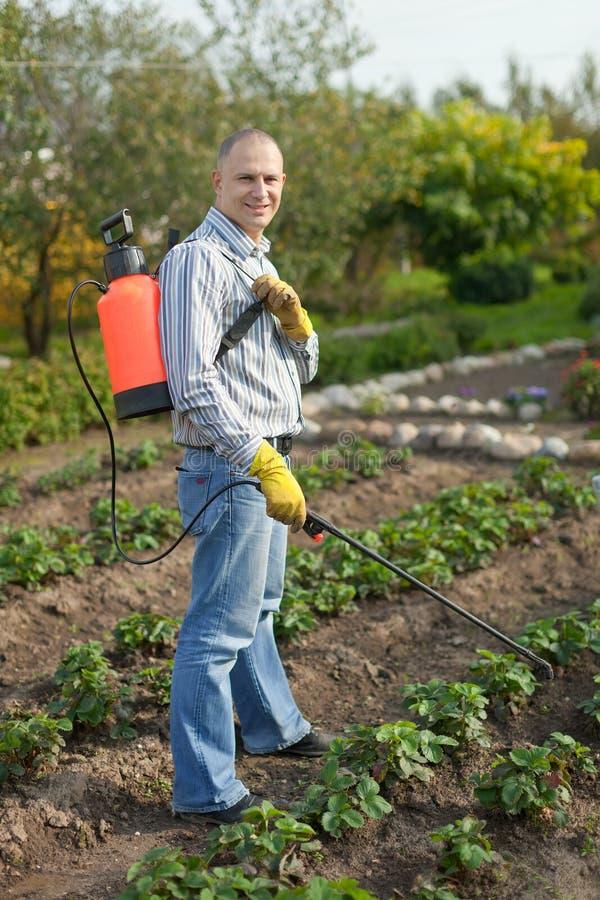 Ψεκάζοντας φυτό φραουλών ατόμων στοκ φωτογραφίες