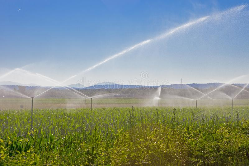 Ψεκασμός νερού γεωργίας στοκ φωτογραφίες