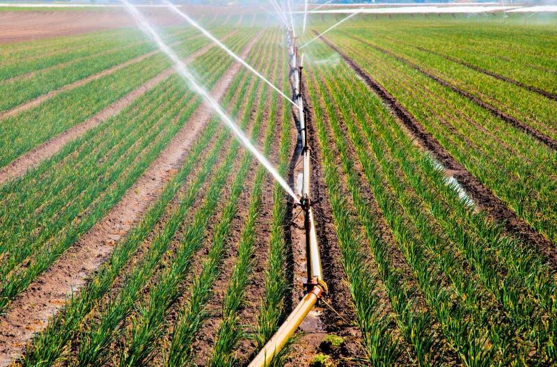 Ψεκασμός νερού στη γεωργία στοκ φωτογραφία