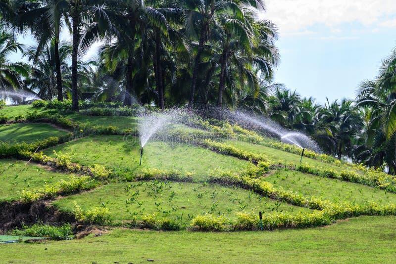 Download Ψεκαστήρας νερού χορτοταπήτων κήπων Στοκ Εικόνα - εικόνα από αναπτύξτε, πάρκο: 62712537