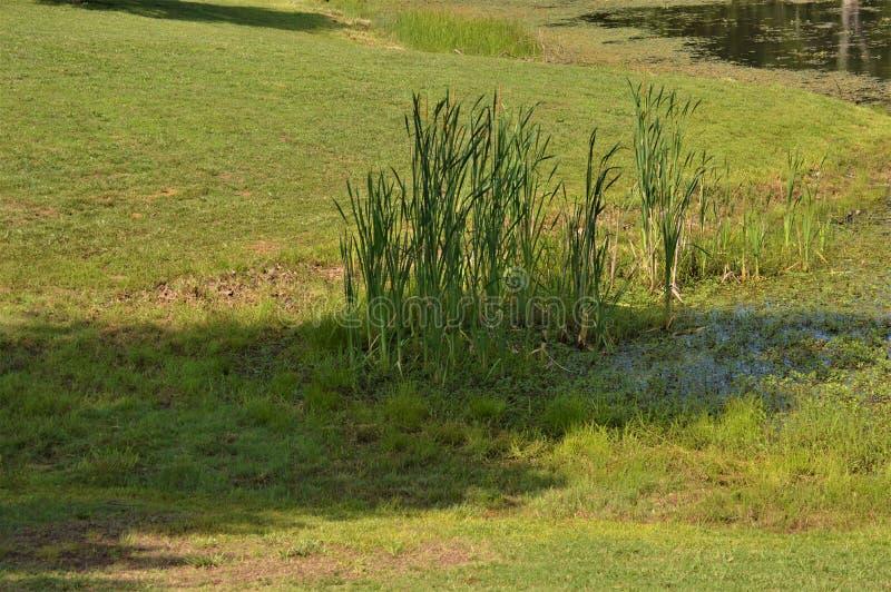 Ψηλή πράσινη ανάπτυξη χλόης σε έναν χαμηλό χλοώδη τομέα περικοπών στοκ φωτογραφίες με δικαίωμα ελεύθερης χρήσης