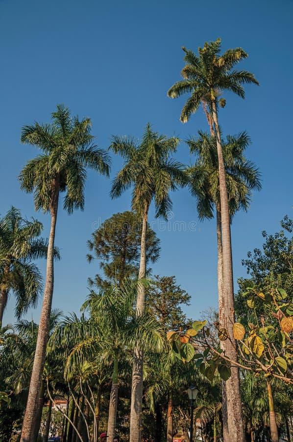 Ψηλοί και φυλλώδεις φοίνικες στη μέση της βλάστησης σε έναν τετραγωνικό κήπο τις ηλιόλουστες ημέρες στο SAN Manuel στοκ εικόνα με δικαίωμα ελεύθερης χρήσης