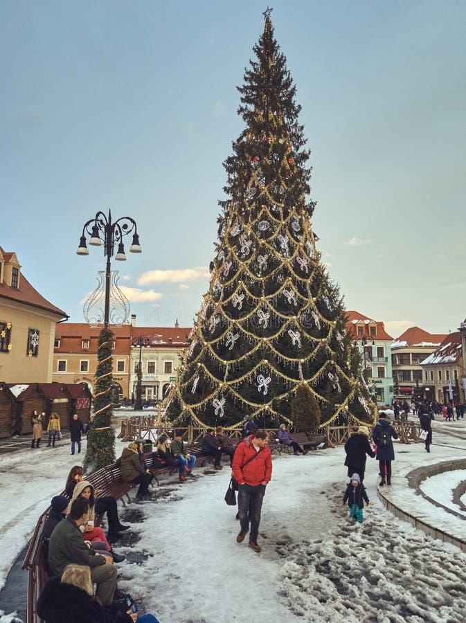 Ψηλό χριστουγεννιάτικο δέντρο στο τετράγωνο του Συμβουλίου, Brasov, Ρουμανία στοκ φωτογραφία με δικαίωμα ελεύθερης χρήσης