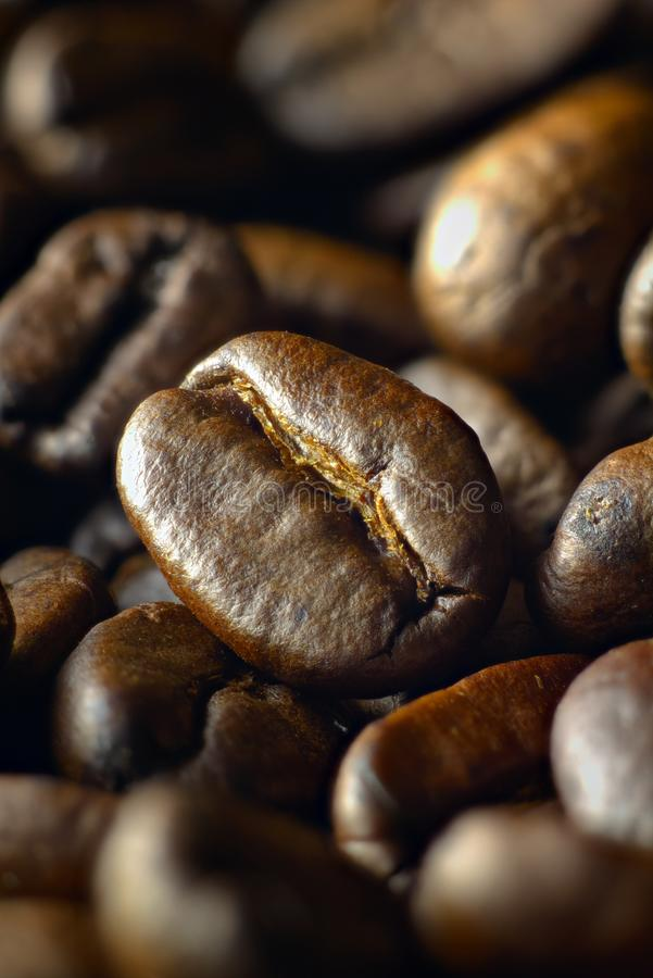 Ψημένα μέσο φασόλια καφέ που βλασταίνονται διαγωνίως στοκ φωτογραφία