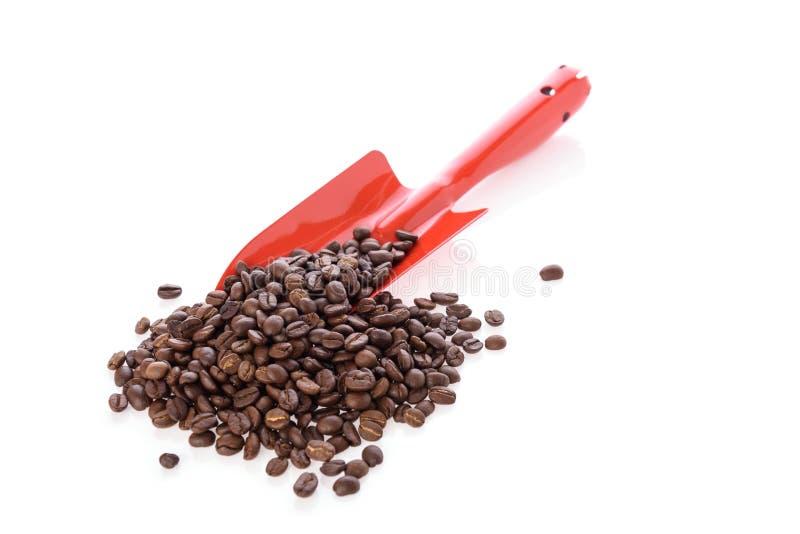 Ψημένα φασόλια καφέ και κόκκινο φτυάρι που απομονώνονται πέρα από το άσπρο υπόβαθρο στοκ εικόνες